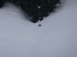 Fängt eigentlich der frühe Fuchs auch Würmer?