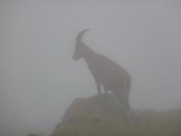 der und seine Freunde tauchten auf einmal aus dem Nebel auf