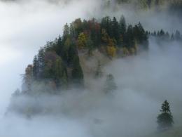 zurück in den Nebel