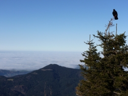 zäher Nebel im Tal