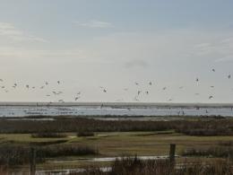 Vogelinsel
