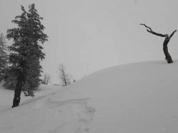 bizarrer Baum, bizarrer Schnee