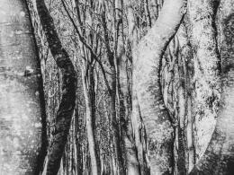 Buchendschungel
