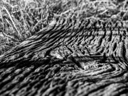oooold wood
